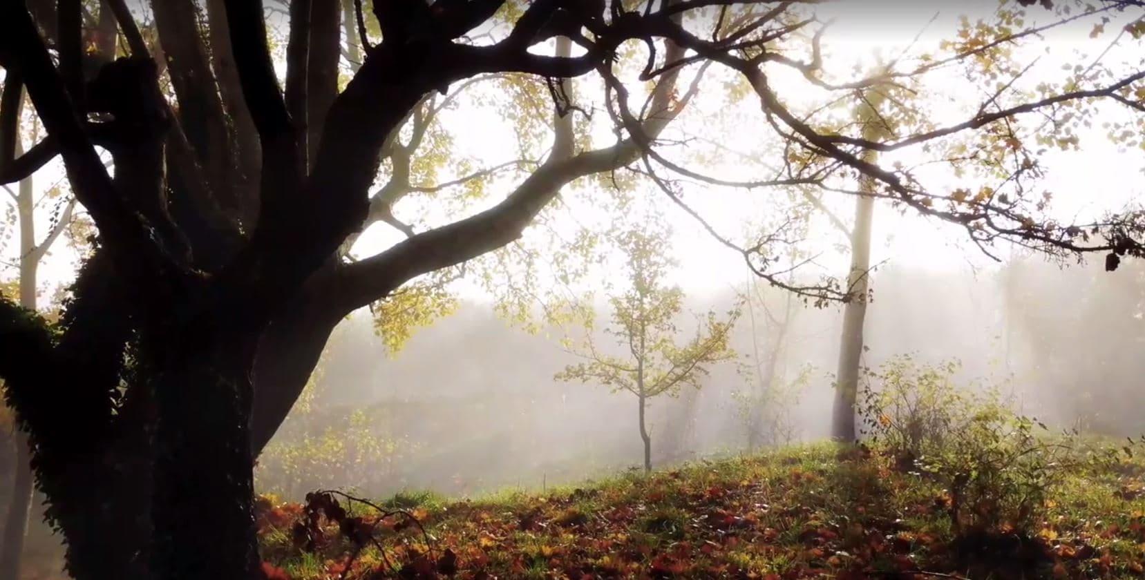 Morning Mist at Fonte Martino