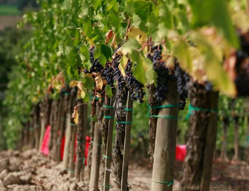 Our Favorite Tuscan Wineries – Part 1