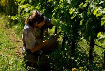 Podere Albiano anna in vineyard