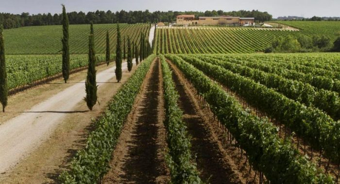 La Braccesca winery