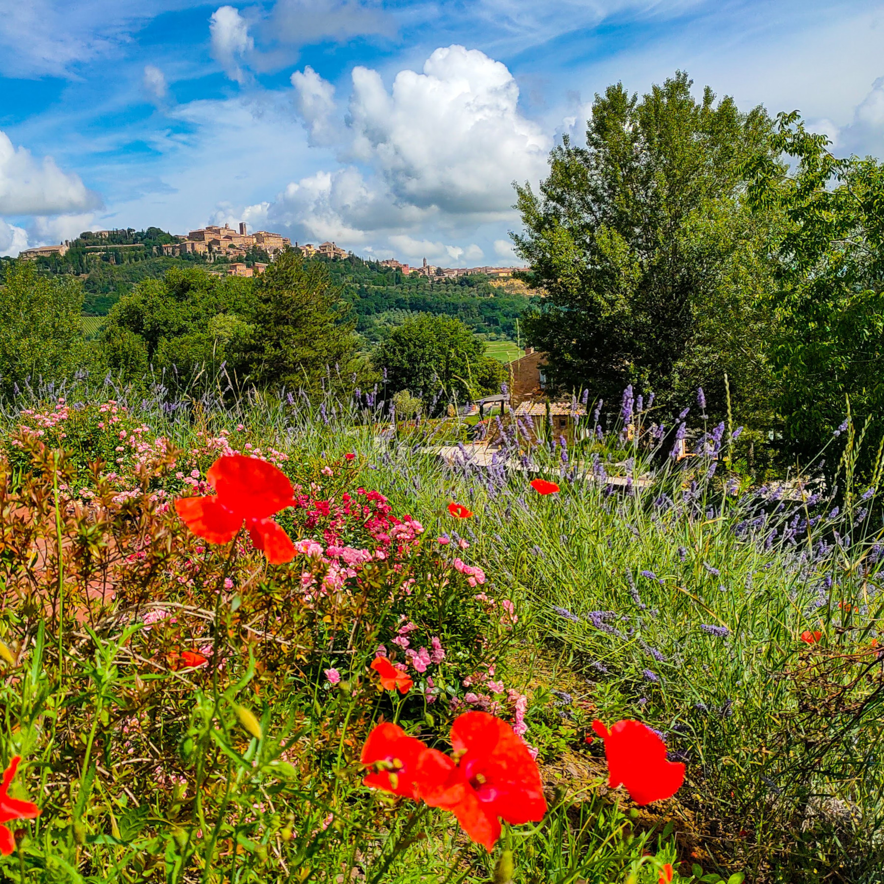 Fonte Martino Bed and Breakfast view of Montepulciano