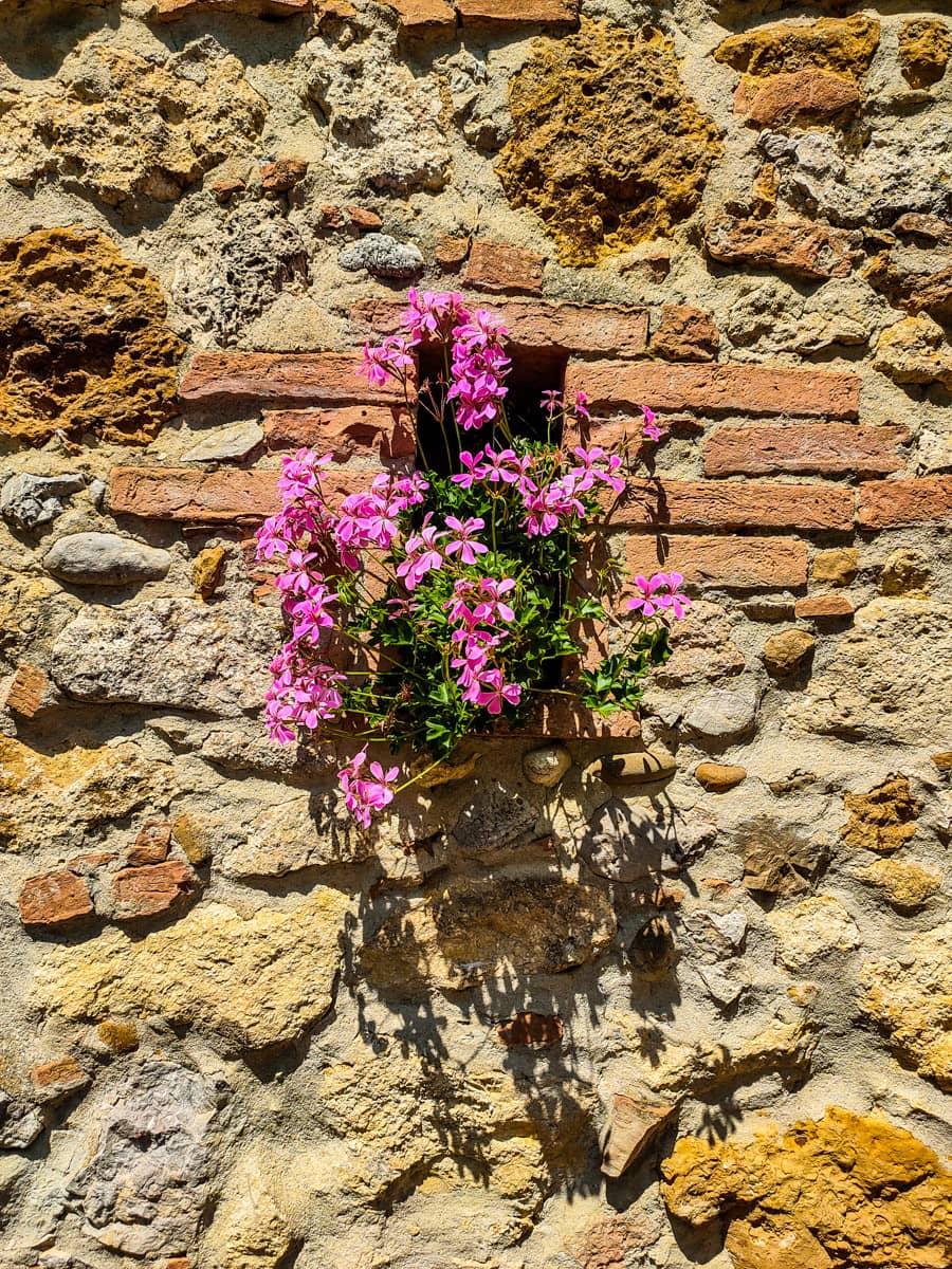 toscaanse-muur-met-roze-bloemen