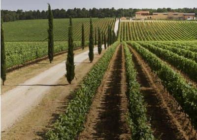 vignobles toscans à visiter à montepulciano et montalcino
