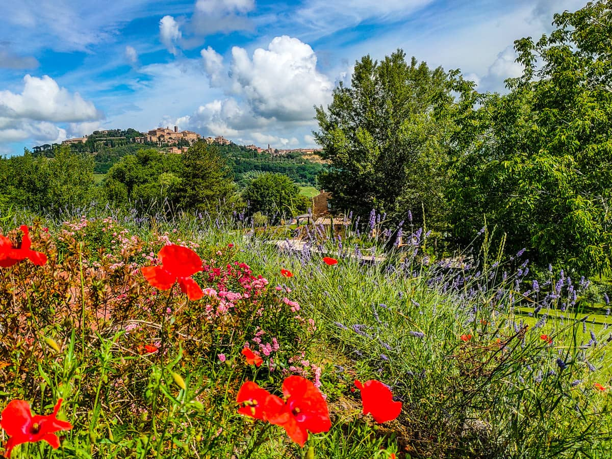 tuscany-yoga-meditation-view-of-montepulciano-flowers